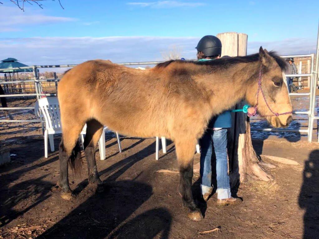 horses-for-sale-blazing-hope-youth-family-ranch-caldwell-idaho
