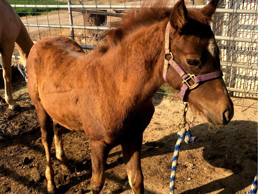 sponsor-a-horse-blazing-hope-youth-family-ranch-caldwell-idaho